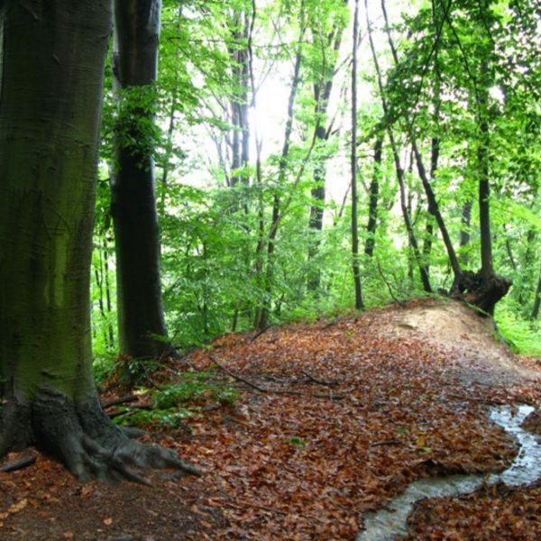 Castagneto Po_Riserva Naturale del bosco del Vaj_689x474